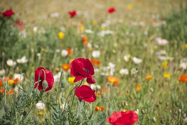 flower-199099_640