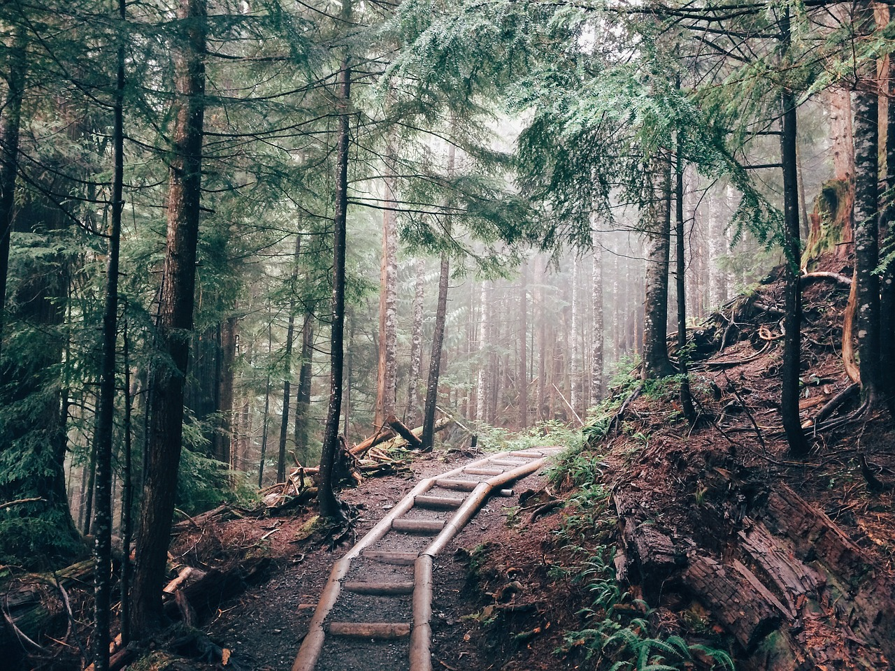 hiking-598203_1280