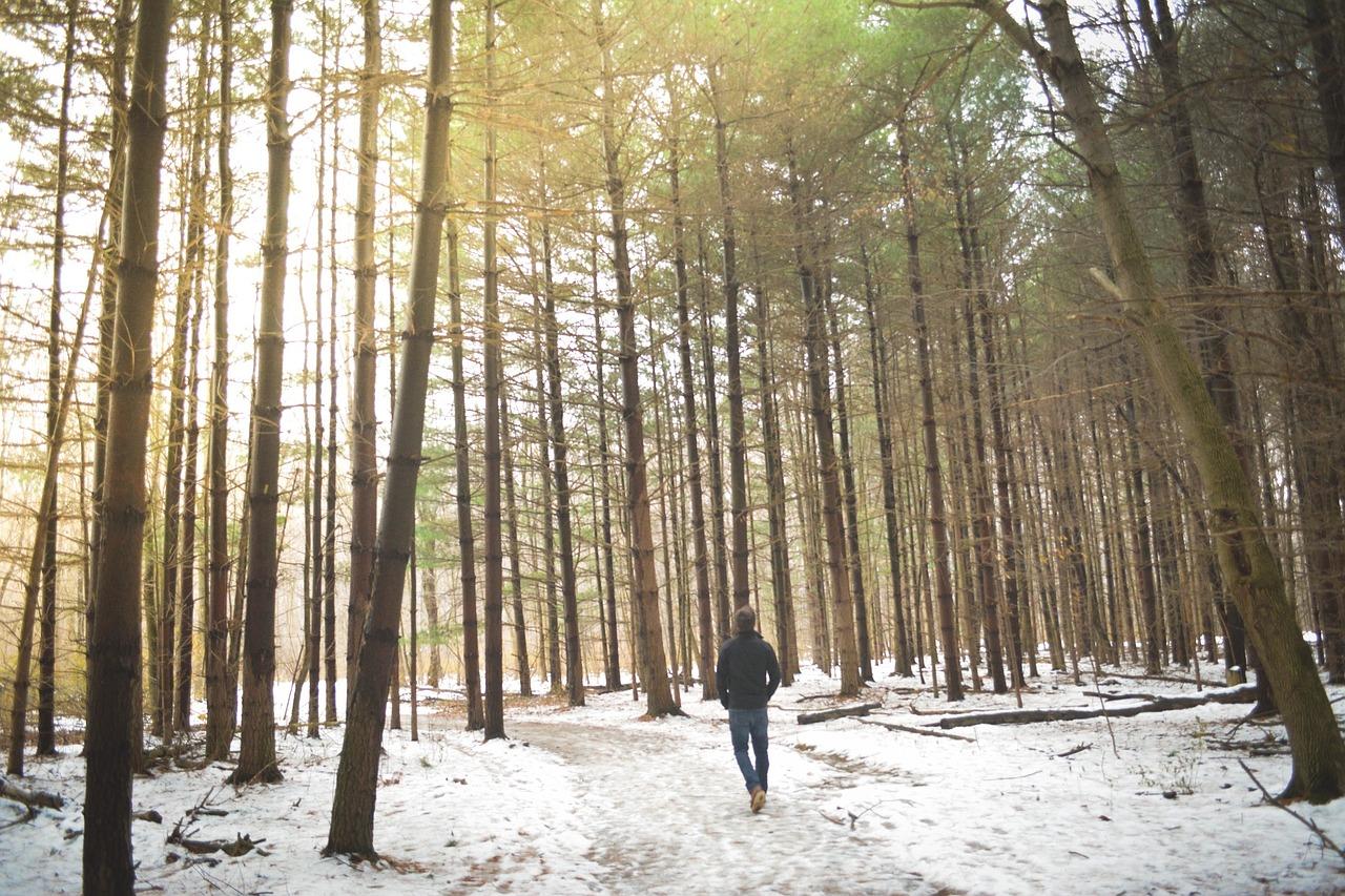 woods-690939_1280