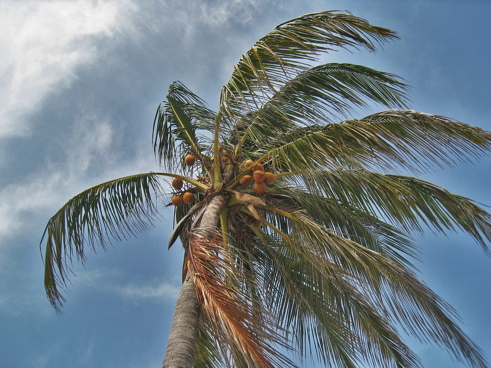 palm-tree-in-the-storm-1088921_960_720