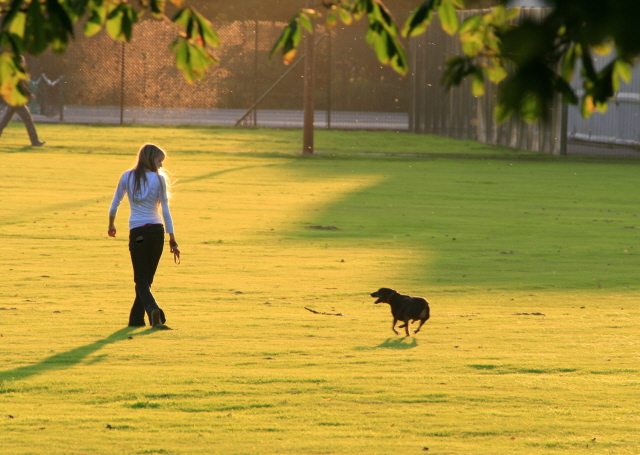 Dog_walking_in_West_Park_-_geograph.org.uk_-_998126