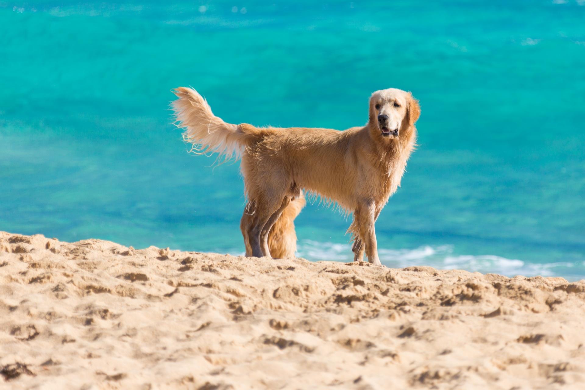 dog-on-the-beach-1457116424iVb