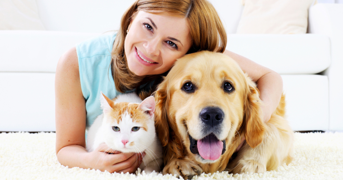 Pet ownership: what to consider before committing   I Live Up